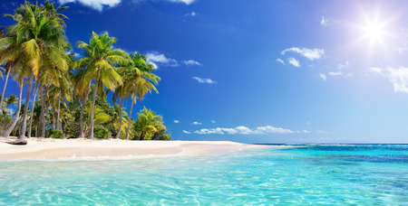 Palm Beach In Paradiso Tropicale - Isola Di Guadalupe - Caraibi