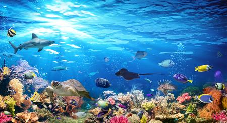 Scène sous-marine avec récif de corail et poissons exotiques Banque d'images