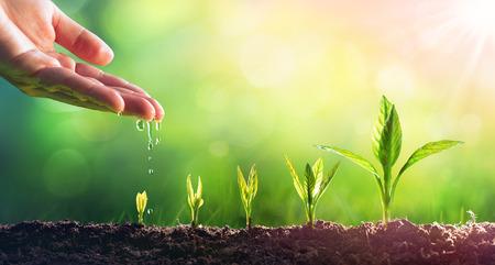 Regar a mano las plantas jóvenes en crecimiento