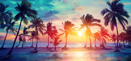 Palm Trees Silhouettes On Tropical Beach At Sunset - Modern Vintage Colors Banque d'images