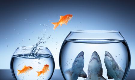 Hai-Falle - Geschäftsrisikokonzept - Goldfisch, der im Haifischbecken springt Standard-Bild