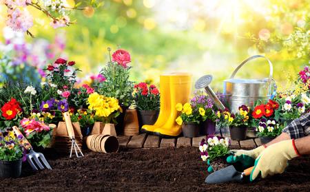 Gardening - Equipment For Gardener And Flower Pots In Sunny Garden Archivio Fotografico - 119611322