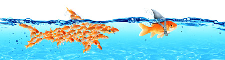 Business - Leadership And Teamwork Concept - Goldfish With Fin Shark And Followers Group Of Small Fishes Archivio Fotografico - 119611323