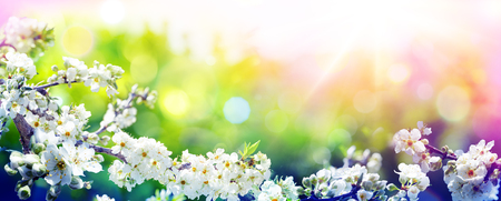 Blooming In Spring - With Trend Colors Palette - Almond Flowers In Sunny Blurred Background Archivio Fotografico - 119611231
