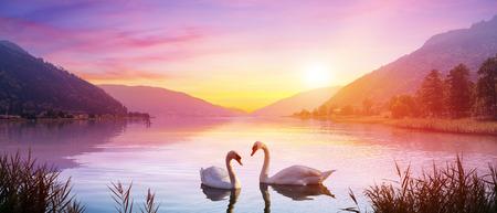 Swans Over Lake At Sunrise - Calm And Romance Archivio Fotografico - 123144540