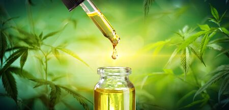 Drop Oil Hemp Cannabis