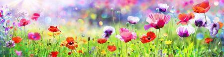 Mohnblumen im sonnigen Feld mit abstraktem Bokeh Standard-Bild