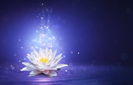 Magic Lotus Flower With Fairy Light - Miracle and Mystery Concept Imagens