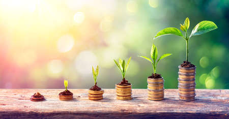 Money Growth Concept - Plants On Coin Stacks In Increase Stock fotó