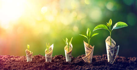 Dollar Seedling - Growth Concept - Plants On Banknotes In Increase Stock fotó