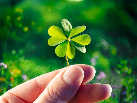 Four Leaf Clover - Good Luck - Hands Hold Lucky Shamrock