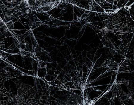 Spiderweb On Black Darkness - Halloween Background - Real Cobweb