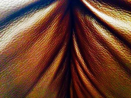 leren bank: Lederen sofa close-up textuur