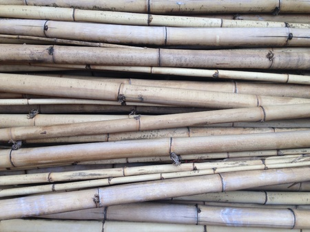 the cut: Bamboo cut