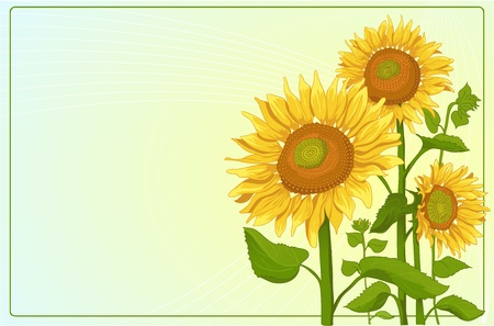 corolla: Background with sunflowers  Illustration