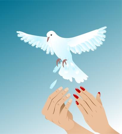 Hands of woman and man setting free white pigeon Ilustração