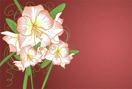 burgeon: Background with amarillis