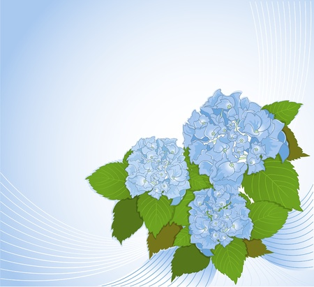 Background with hydrangea Vector