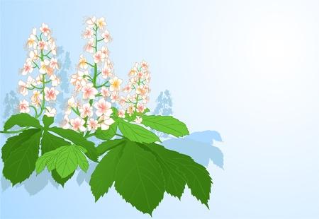 Achtergrond met kastanje bloemen