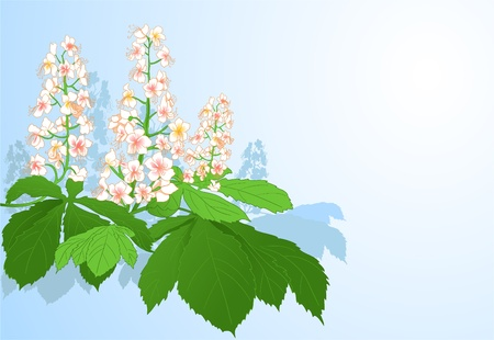 Background with chestnut flowers  Illustration