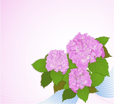Background with hydrangea. Vector decorative background with a composition of hydrangea flowers.  Vector