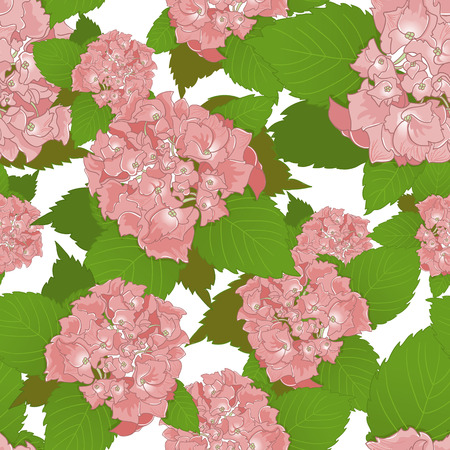 an inflorescence: Seamless background with pink hydrangea