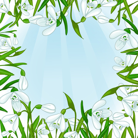 Floral background with white snowdrops Vector