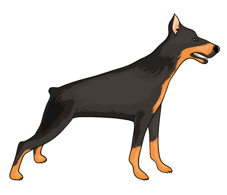Doberman, eps10 Stock Illustratie