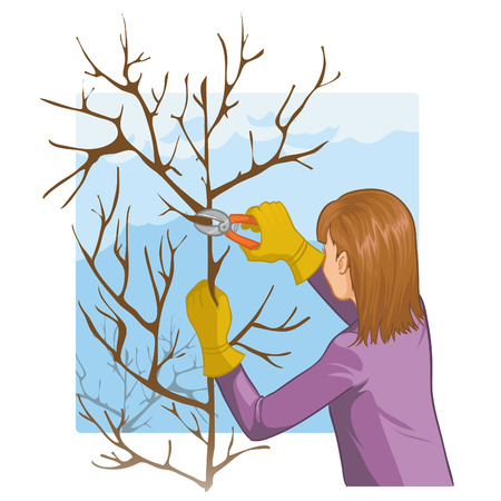 tree trimming: Young woman trimming a tree with garden clippers Illustration