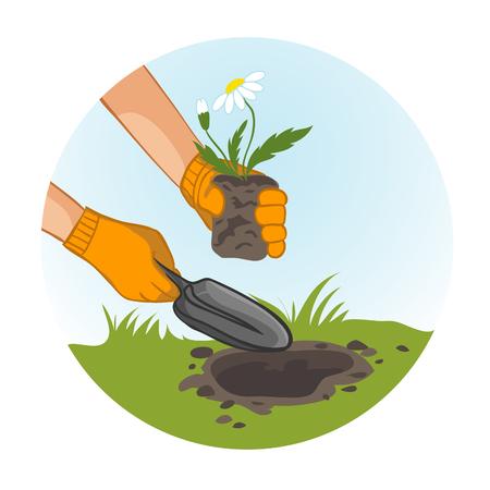 back yard: Hands planting flowers in garden