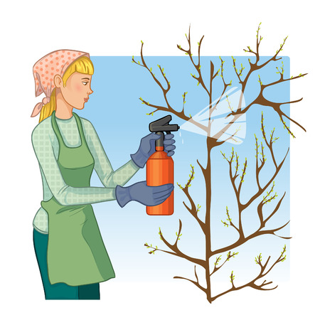 landscape gardener: Young woman spraying tree in garden with protection substance