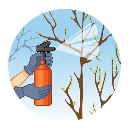 paysagiste: Mains pulvérisation arbre dans le jardin avec la substance de protection