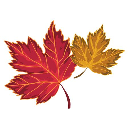 Two autumn maple leaves, vector image