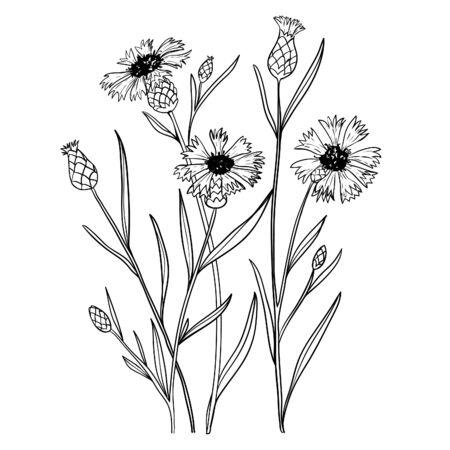 Illustration with cornflowers, outline, vector Vektorové ilustrace