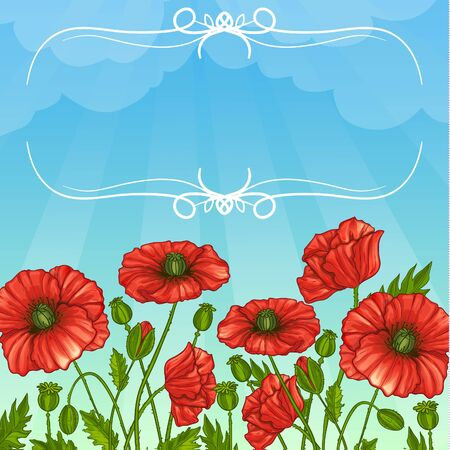 Floral background with poppy flowers, vector image