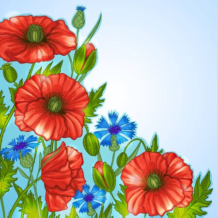 Floral background with poppies and cornflowers, vector image