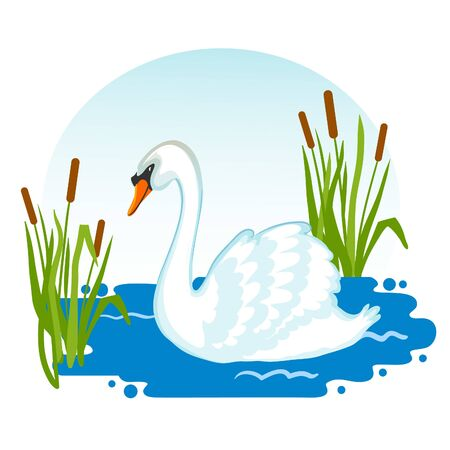 Swan swimming in lake, vector image