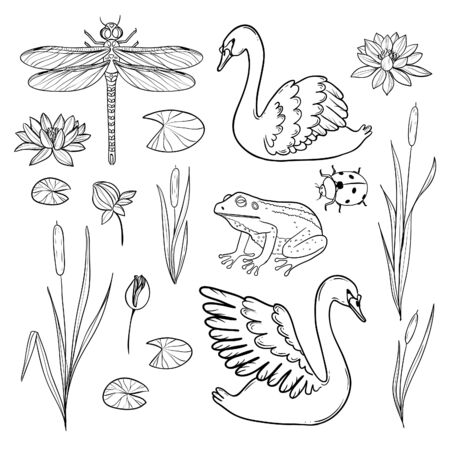 Set of hand drawn elements represents water wildlife: swan, frog, dragonfly, ladybird, rush and waterlily. Collection can be used for coloring page and to compose own background. Vector image, outline. 矢量图像