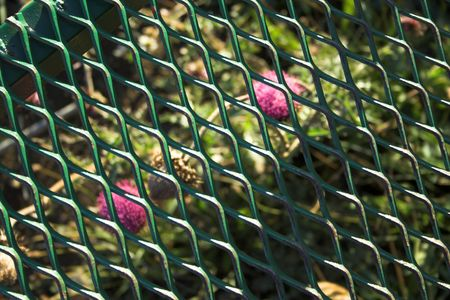 Two thistles behind a grating Stock Photo - 381923