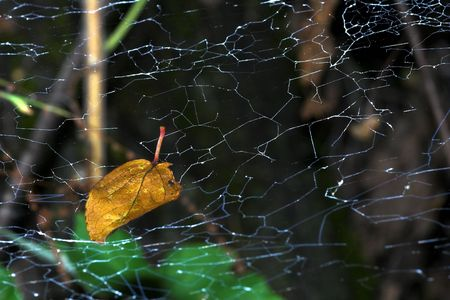 dewey: leave in spider web Stock Photo