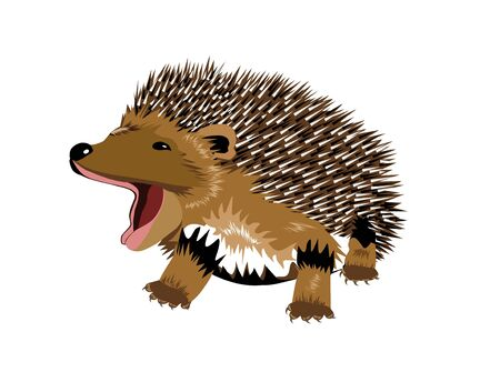 insectivorous: Young hedgehog - Illustration