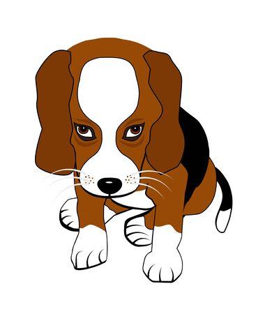 beagle puppy: Sitting beagle puppy