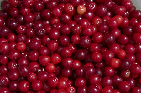 backgraound: background from fresh red cherry