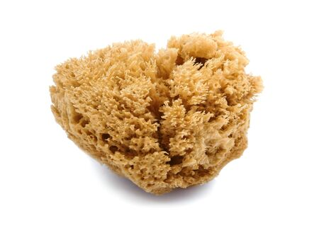 brown natural sponge on white background Stock Photo