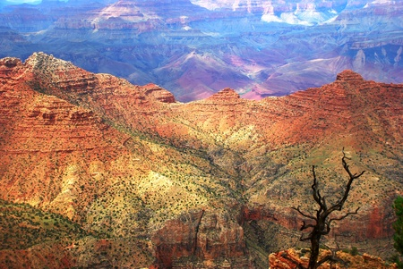 lonely black tree on the background of the Grand Canyon Stock Photo - 16864390