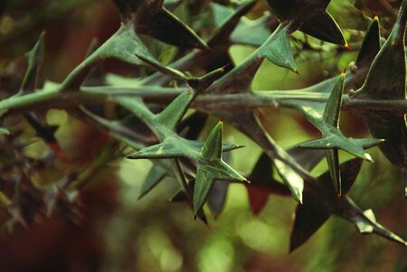 beautiful horizontal branch of succulent plants with triangular leaves  Stock Photo