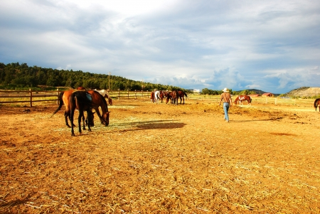 horses at the yellow ranch Stock Photo - 16864391