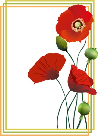 Beautiful flower vector illustration of red poppies in the frame  Design elements  Vector