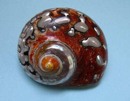 Nacre seashell Stock Photo - 2206607