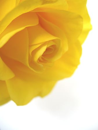 Detail of yellow rose Stock Photo - 3058109